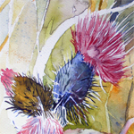Distel Aquarelle